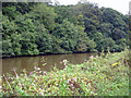 SJ5676 : Kingsley - Hatton's Hey Wood across the River Weaver by Mike Harris