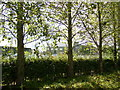 TA0243 : Hedge hides the secure perimeter fence around Normanby Barracks by Phil Catterall