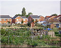 TA0630 : Allotments on National Avenue, Hull by Charles Rispin