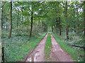 SE9465 : Cherry Wood by Stephen Horncastle