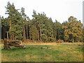 NY5446 : Broomrigg Plantation by wfmillar