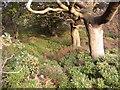 SE0417 : Wood near Pike Law Quarry, Saddleworth Road, Barkisland by Humphrey Bolton