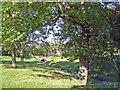 SJ9684 : Lyme Handley: Bollinhurst Brook in Lyme Park by Mike Harris