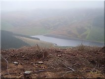 NT0023 : Fall Cleuch Wood by Richard Webb