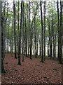 SX5358 : Boringdon Park Wood by Derek Harper