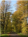ST8695 : Autumn colours at Chavenage Green by Philip Halling