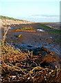 TA3017 : Humber Bank near Sunk Island Sands by Paul Glazzard