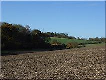 SU7945 : Farmland, East Green by Andrew Smith