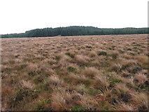 NS4478 : Moorland below Doughnot Hill by Chris Wimbush