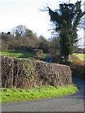 SJ3155 : Country Lane near Bryn-yr-eithin by John S Turner
