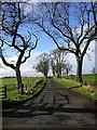 NY0687 : Road to Gillrig Farm by Iain Thompson