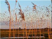 TF8244 : Geese over Burnham Norton by Phil Brightman