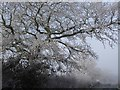 SP8519 : Hoar-frosted Tree by Rob Farrow
