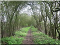 TL6046 : Harcamlow Way near Horseheath by Alan Kent
