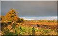SJ5550 : Autumn farmland in morning light by Espresso Addict