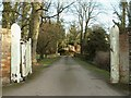 TL5947 : Driveway to Horseheath Lodge by Robert Edwards