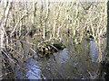 TG3425 : Alder swamp, Broad Fen, Dilham, Norfolk by Rodney Burton