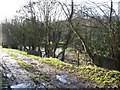SJ1112 : Beside The River Vyrnwy by Roger Gilbertson