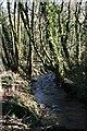 SX2785 : Valley Woodland by Tony Atkin