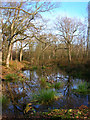 TQ5115 : Moat, Moat Wood by Simon Carey