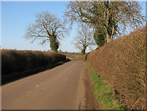 ST7626 : Near Quarr by Dave Lowther
