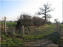 SJ5364 : The Sandstone Trail near Oak Tree Farm by John S Turner