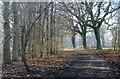 SJ7673 : Three Trees by Marcus Hargis