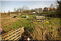 SP0683 : Moor Green Allotments by Phil Champion