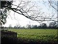 SJ8679 : Cheshire farmland by Russ Ware