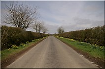 TF1598 : Approaching Rothwell in spring by Mr T