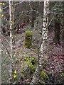 NY3873 : Scots Dyke boundary stone by Howard Mattinson