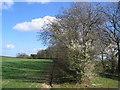 SE8958 : Holmfield Farmland by Stephen Horncastle