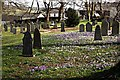 SX2468 : Churchyard with Crocusus by Tony Atkin