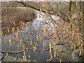 SK1644 : River Dove by Pat Poyser
