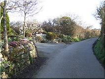 SW6923 : Spring colour on Skyburriowe Lane by Jonathan Billinger