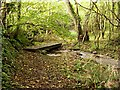 SX3554 : Footpath through Valley-bottom Woodland by Tony Atkin