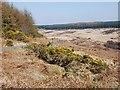 NR9469 : Moorland on Cowal by Patrick Mackie