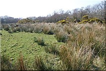 NR9666 : Poor grazing by Patrick Mackie