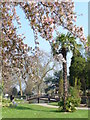 SU9950 : Spring in Stoke Park Gardens by Colin Smith