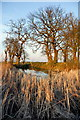 TL1390 : Pond near Folksworth by Julian Dowse