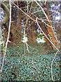 TL0829 : Unusual group of trees - Jeremiahs Tree? by John Yaxley