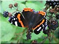 TL8080 : Red Admiral butterfly on bramble by Andy Potter