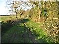 TG3425 : Broad Fen Lane by Nick Smith