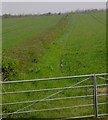 TL1438 : View East over gate at South Shefford by John Yaxley