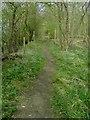 TL1040 : Along Greensands Ridge Walk by John Yaxley