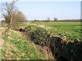 TL2457 : Abbotsley Brook, Abbotsley, Cambs by Rodney Burton