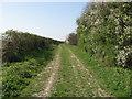 TL4342 : The Icknield Way near Chrishall Grange by Steve F