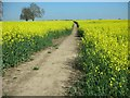 SP9163 : Footpath from Wollaston to Irchester by Will Lovell