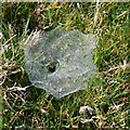 SX3467 : Spider Web in the Grass by Tony Atkin