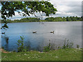 SJ4035 : Ellesmere - the mere by Pauline Eccles
